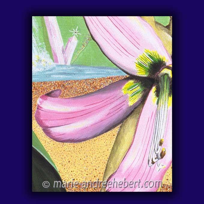 symphonie de joie détails, fleur, amaryllis,